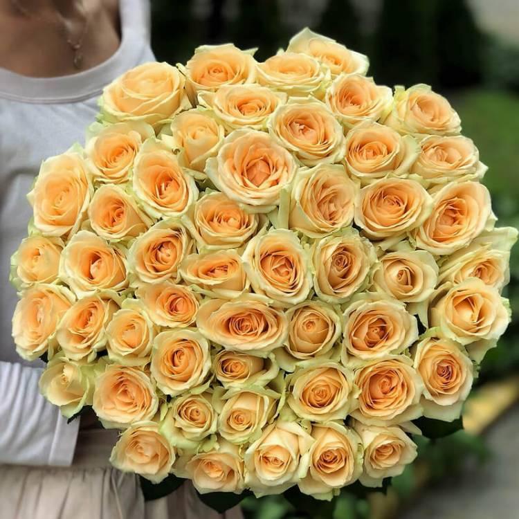 51 персиковая роза