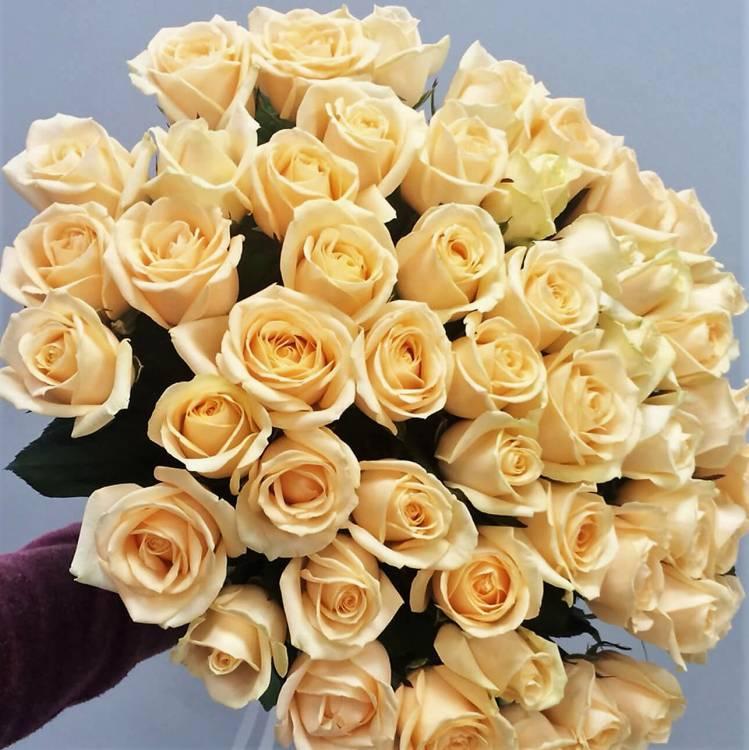 51 бежевая роза